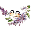 Birds - Animals -