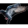 Birds - Životinje -