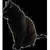 Black Cat - Animals -