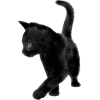 Black Cat - Animais -