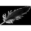 Black Feather - Uncategorized -