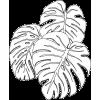 Black and white leaves - Natur -