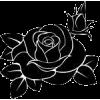 Black rose - Illustrations -