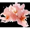 Blossom - Plants -