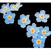Blue Flowers - Rośliny -
