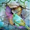 Bluebird - My photos -