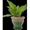 Bondslifestyle Planter Rustico Verde - 植物 -