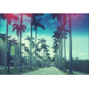 Palm Beach - Pozadine -