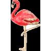 Brooch flamingo - Illustrazioni -