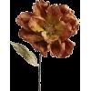 Brown Flower - Plants -
