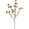 Brown Flower - Plants -