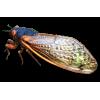 Bug - Animais -