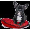 Bull Dog Cute Puppy - Animals -