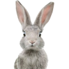 Bunny - Animals -