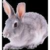 Bunny - Tiere -