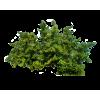 Bush - Plantas -