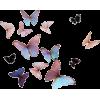 Butterflies - Nature -
