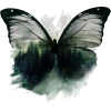 Butterfly Nature Art - Illustrations -