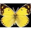 Butterfly - Životinje -