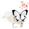 Butterfly - 插图 -