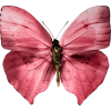 Butterfly - Items -