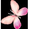 Butterfly - Priroda -