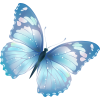 Butterfly - Nature -