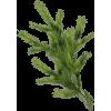 By L33L - Plants -