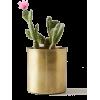 Cactus plant - Plants -