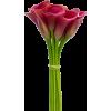 Callas flowers - Uncategorized -