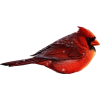 Cardinal - Animals -