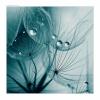 Turquoise - Background -