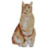 Cat illustration - My photos -