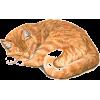 Cat - Ilustracije -