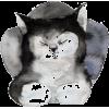 Cat - Illustrations -
