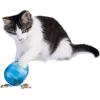 Cat playing with toy - Animals -
