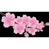 Cherry Blossom Branch - Uncategorized -