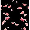 Cherry Blossom Petals - Ilustracije -