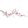 Cherry Blossom - Illustrations -