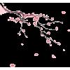 Cherry Blossom - Illustrations -
