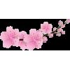 Cherry Blossom - Uncategorized -
