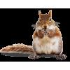 Chipmunk - Animali -