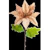 Christmas Flower - Plants -