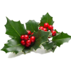 Christmas Holly - Biljke -