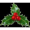 Christmas Holly - Plants -