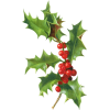 Christmas Holly - Plants -
