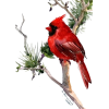 Christmas - Animals -