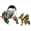 Christmas bird - Animals -