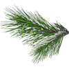 Christmas branch - Natura -