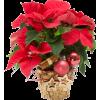 Christmas flower - Illustrazioni -
